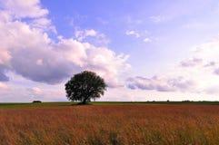 Árvore em um campo Imagens de Stock Royalty Free