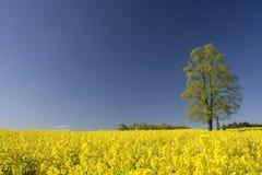 Árvore em um campo amarelo fotos de stock