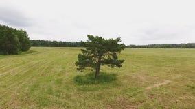 Árvore em um campo em um prado video estoque