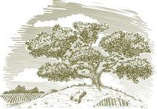 Árvore em um desenho do monte Foto de Stock Royalty Free