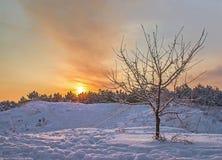 Árvore em um fundo de um por do sol do inverno na floresta Imagens de Stock