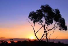 Árvore em um fundo do contraste de uma paisagem sul Imagens de Stock Royalty Free