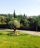 Árvore em um jardim foto de stock