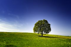 Árvore em um monte Fotografia de Stock