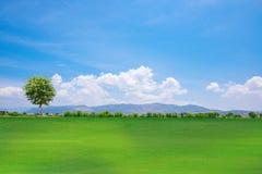 Árvore em um monte da grama verde Fotografia de Stock Royalty Free