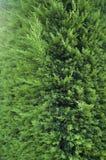 A árvore em um parque Imagem de Stock