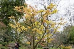 Árvore em um parque Fotografia de Stock