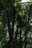 Árvore em um parque animal Fotografia de Stock