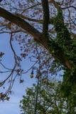 Árvore em um parque da cidade na primavera Foto de Stock Royalty Free