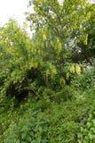 Árvore em um parque da cidade na primavera Imagem de Stock