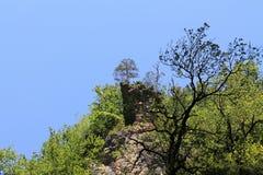 Árvore em um penhasco Imagem de Stock Royalty Free