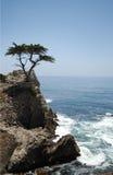 Árvore em um penhasco, Oceano Pacífico Fotografia de Stock