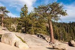 Árvore em um ponto de Taft da rocha no parque nacional de Yosemite, Califórnia, EUA Imagem de Stock Royalty Free