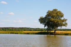 Árvore em um rio Imagem de Stock Royalty Free