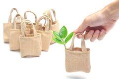 Árvore em um saco de pano Imagens de Stock