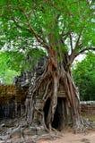 Árvore em um templo Fotos de Stock