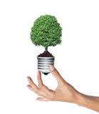 A árvore em uma ampola na mulher cede o conce branco, verde da energia Imagem de Stock Royalty Free