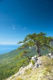 Árvore em uma inclinação Foto de Stock