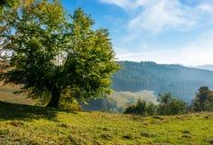 Árvore em uma inclinação no campo montanhoso imagem de stock