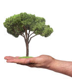 Árvore em uma mão, isolada imagens de stock royalty free