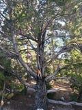 Árvore em uma montanha imagem de stock