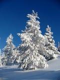 Árvore em uma neve 4 fotografia de stock