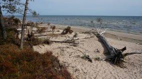 Árvore em uma praia Foto de Stock Royalty Free