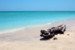 Árvore em uma praia tropical maravilhosa Imagens de Stock