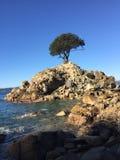 Árvore em uma rocha imagem de stock royalty free