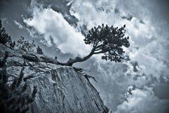 Árvore em uma rocha Imagens de Stock Royalty Free