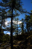 Árvore em yading Imagem de Stock