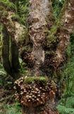 árvore encantado Imagens de Stock