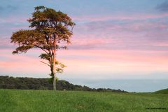 Árvore encantadora Fotografia de Stock Royalty Free