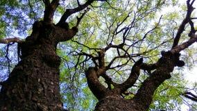 Árvore encantadora Fotos de Stock Royalty Free