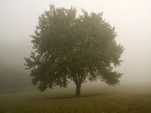 Árvore enevoada da manhã Foto de Stock Royalty Free