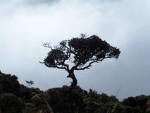 Árvore enorme imagem de stock royalty free