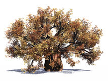 A árvore enorme do baobab isolou-se Fotografia de Stock Royalty Free