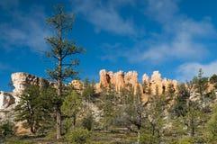 Árvore enorme na frente das rochas da garganta do bryce Foto de Stock