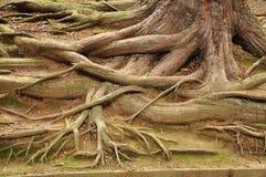 A árvore enraíza o teste padrão Fotos de Stock Royalty Free