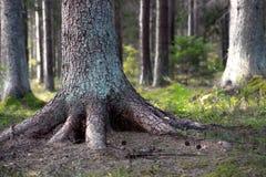 Árvore enraizada fotos de stock royalty free