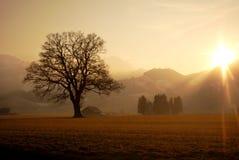 Árvore ensolarada Fotos de Stock Royalty Free