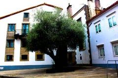 Árvore entre casas Imagens de Stock