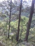 Árvore ereta na montanha foto de stock royalty free