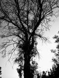 A árvore escura foto de stock royalty free