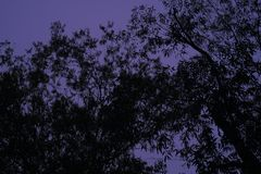 Árvore escura imagens de stock royalty free