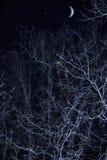 Árvore escura no crepúsculo foto de stock royalty free