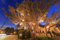 Árvore especial do candelabro em Los Angeles foto de stock royalty free