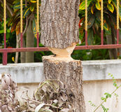 A árvore está sendo cortada Fotos de Stock