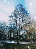 A árvore está sozinha na floresta fotos de stock