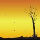 Árvore estéril apenas na queda Fotos de Stock